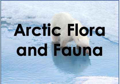 Arctic plants and animals